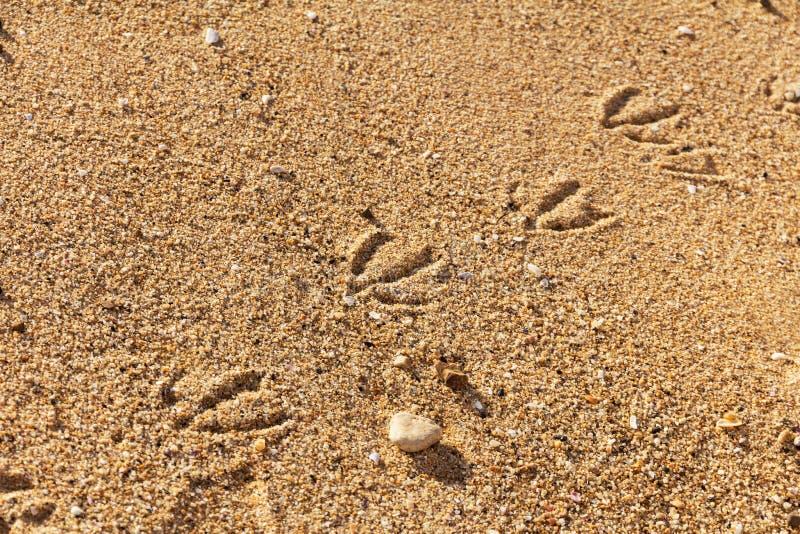 Spuren von Möven lizenzfreies stockbild