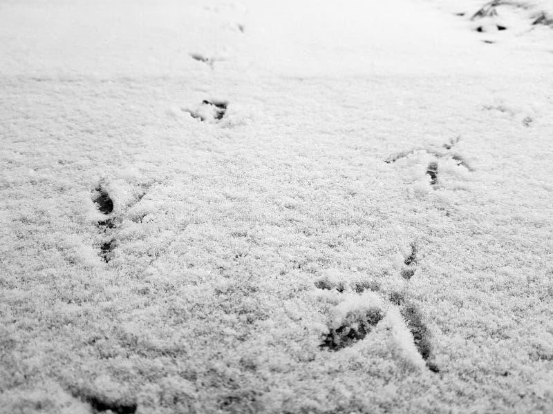 Spuren von Vögeln im Schnee im Winter lizenzfreie stockbilder