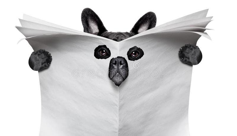 Spy dog reading a newspaper royalty free stock images