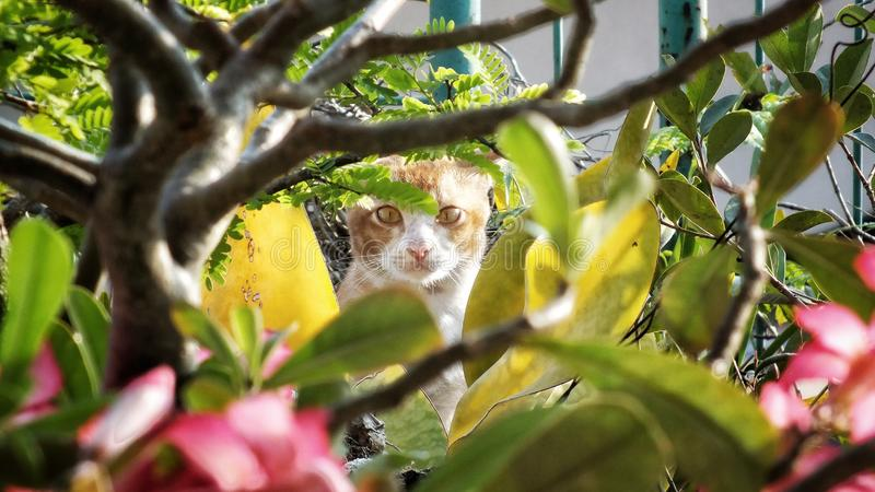 Spy on me. Lokal cat on garden, unexpected momen when the cat walk around. Shoot by Fujifilm HS35EXR