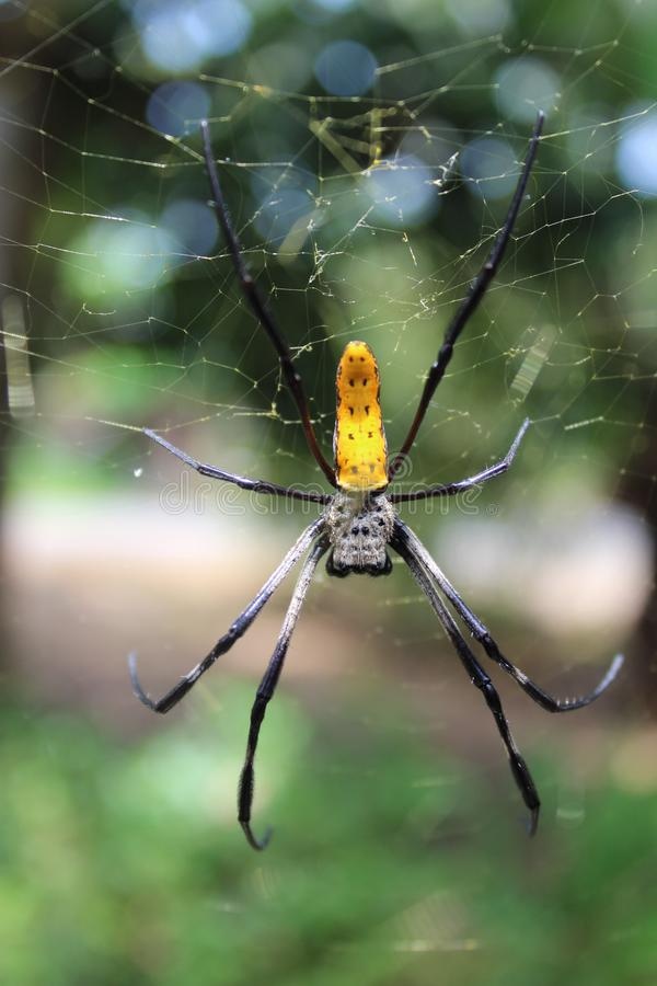 Spyder in junggle van Indonesisch land stock foto