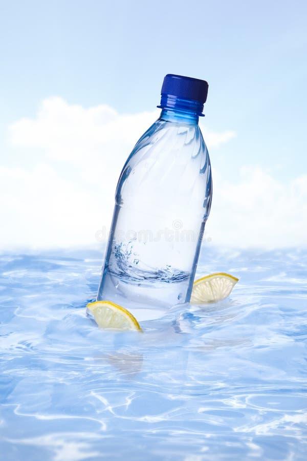Squali di limone immagine stock