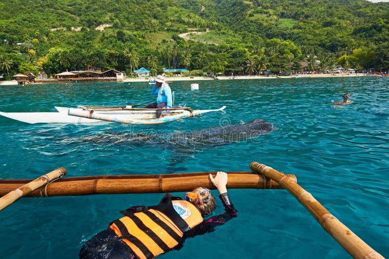 Squalo balena che guarda in Oslob, Filippine fotografie stock