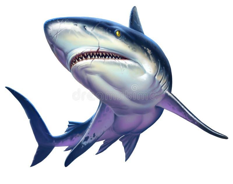 Squalo della scogliera, squalo caraibico della scogliera Su bianco royalty illustrazione gratis