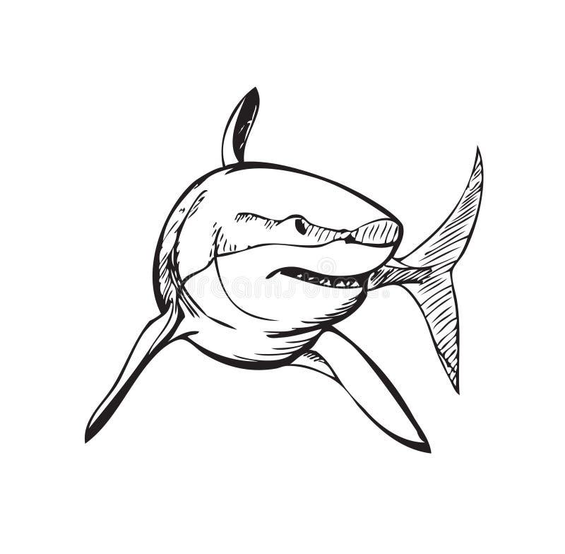 Squalo, illustrazione stilizzata illustrazione vettoriale