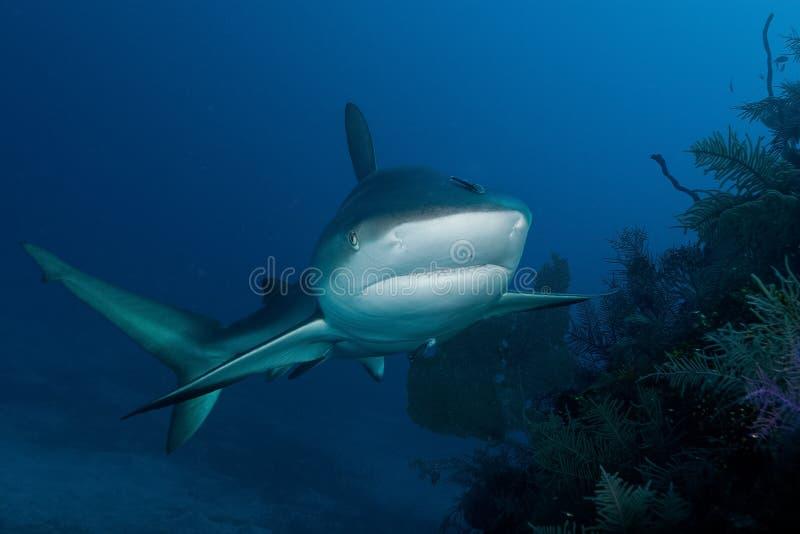 Squalo in oceano fotografia stock libera da diritti