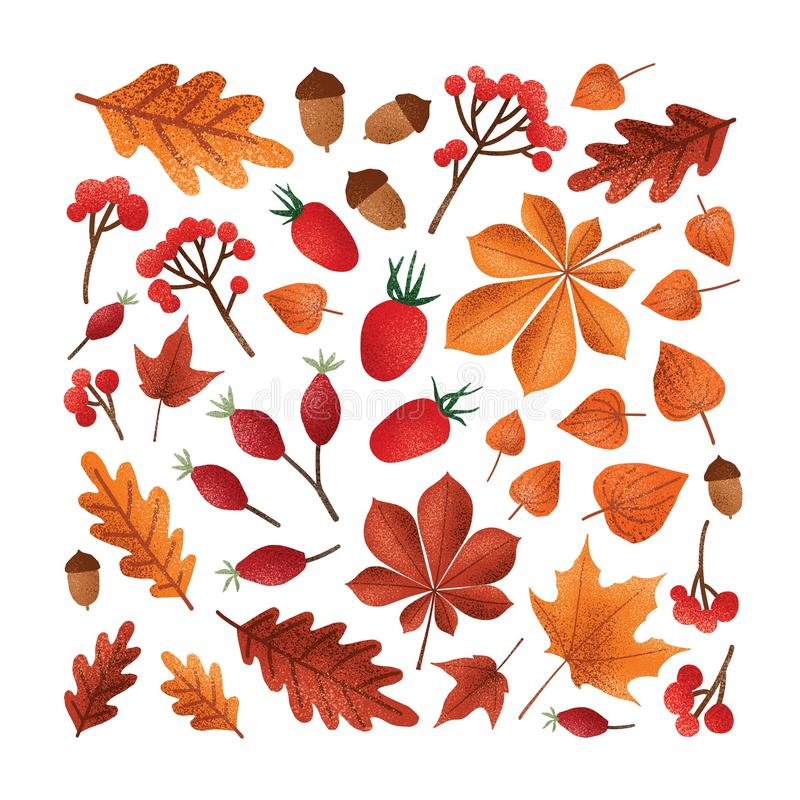 Square backdrop with textured fallen tree autumn leaves or dried foliage, acorns, nuts, berries on white background vector illustration