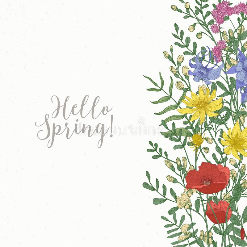 Square card decorated with wild blooming flowers and meadow flowering herbs at right edge and Hello Spring inscription. Beautiful decorative floral background royalty free illustration