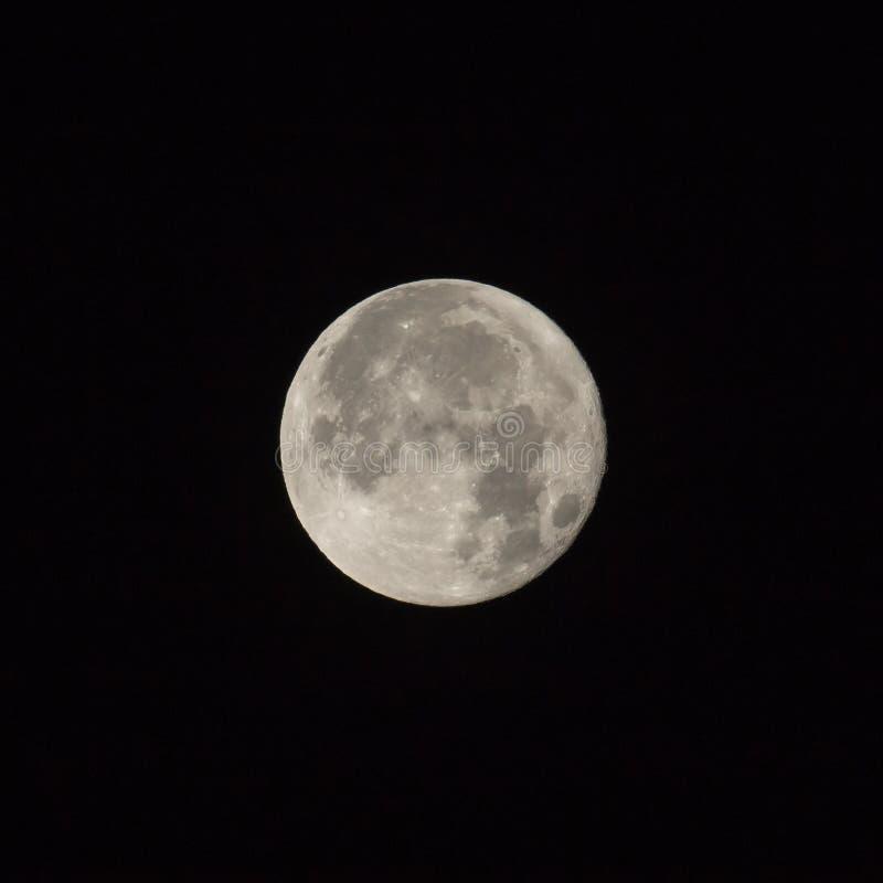 Supermoon Full Moon Square Crop stock photos