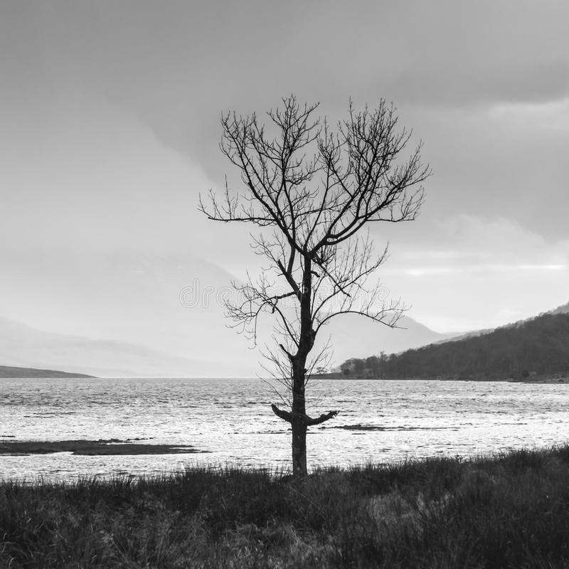 Square Etive Tree royalty free stock photos