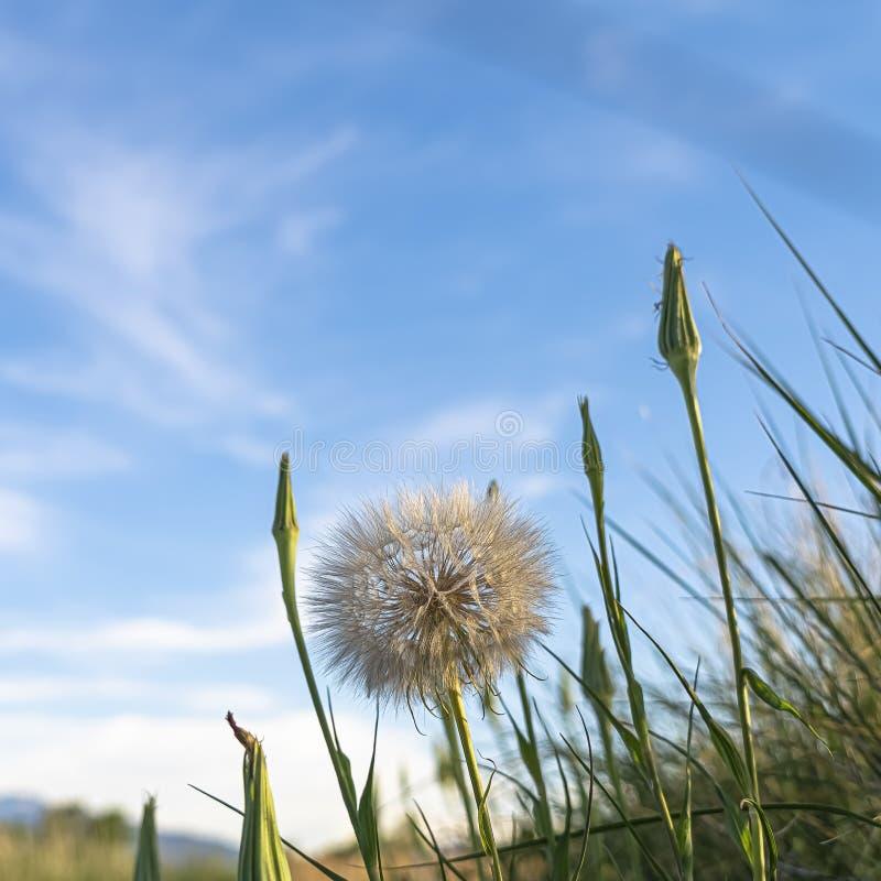 Blur Dandelion In The Sky Framed Art Print By Artlindley