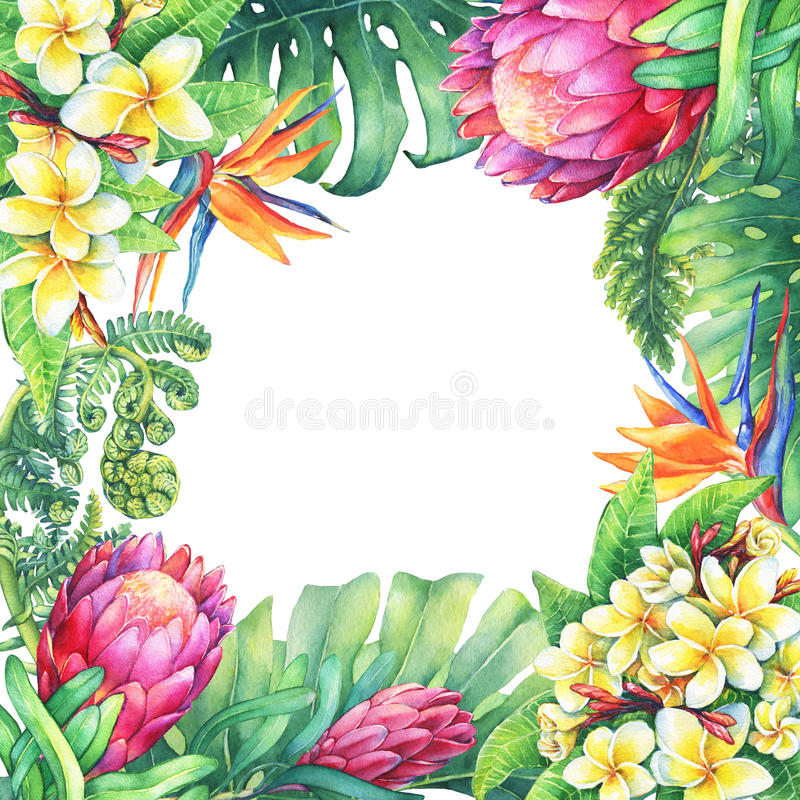 Square frame with branches purple Protea flowers, plumeria, strelitzia and tropical plants. stock illustration