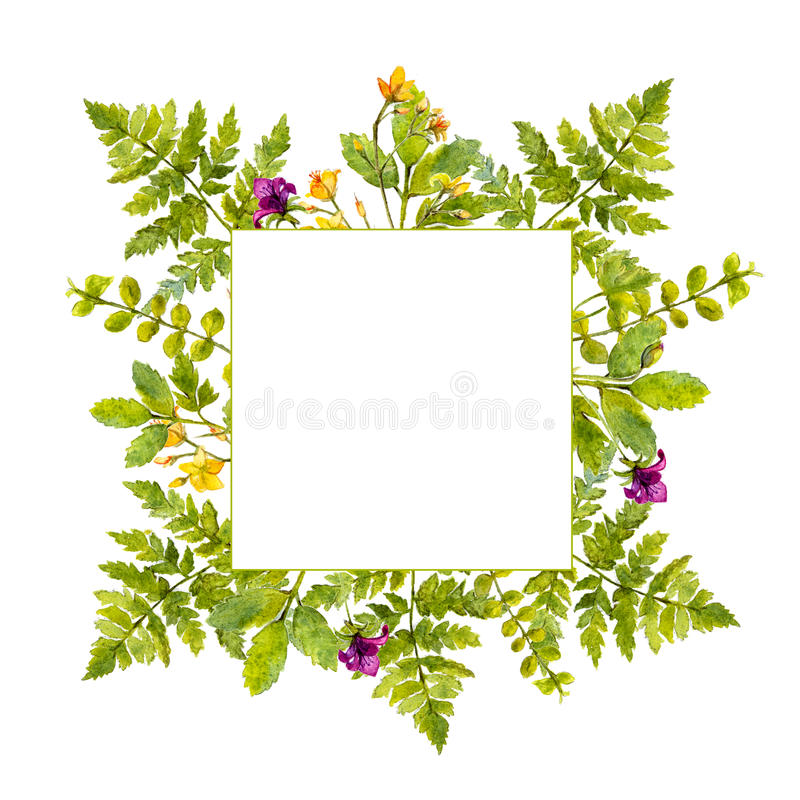 Square frame with painted watercolor green plants and wild flowers. Nature inspired border for natural cosmetics, spring. And summer events vector illustration