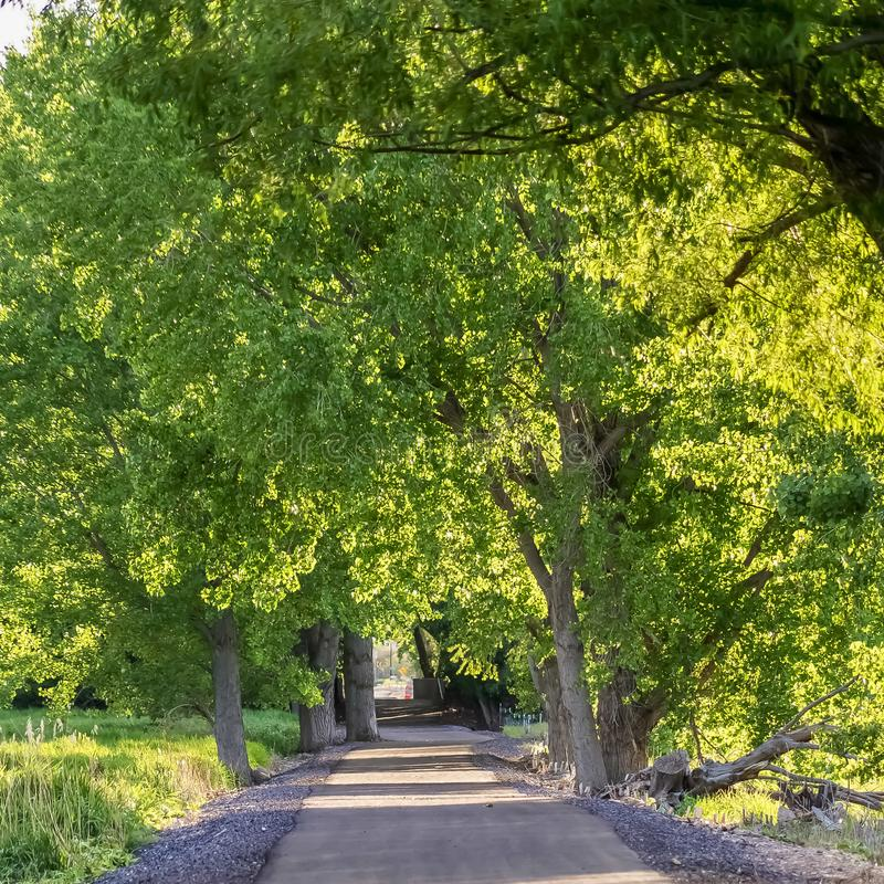 Square frame Paved road running under a vibrant green canopy of tree leaves on a sunny day royalty free stock image