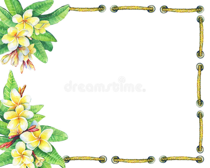 Square frame with tropical resort flowers frangipani plumeria. royalty free illustration