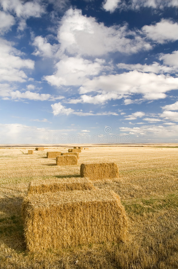 Square hay bales stock photos
