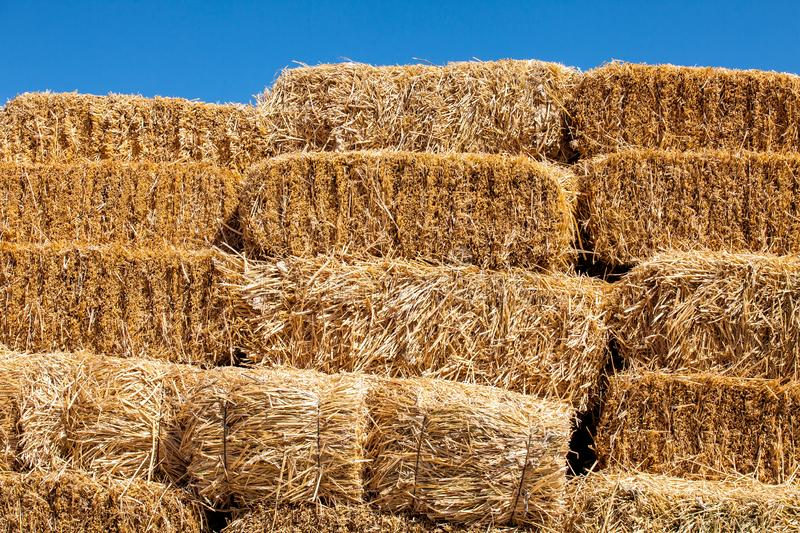 Square hay bales royalty free stock image