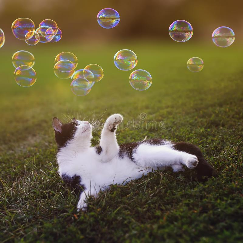 Square portrait with cute little kitten lying on green grass on the summer warm Sunny meadow and catches shiny soap bubbles with. Portrait with cute little stock images
