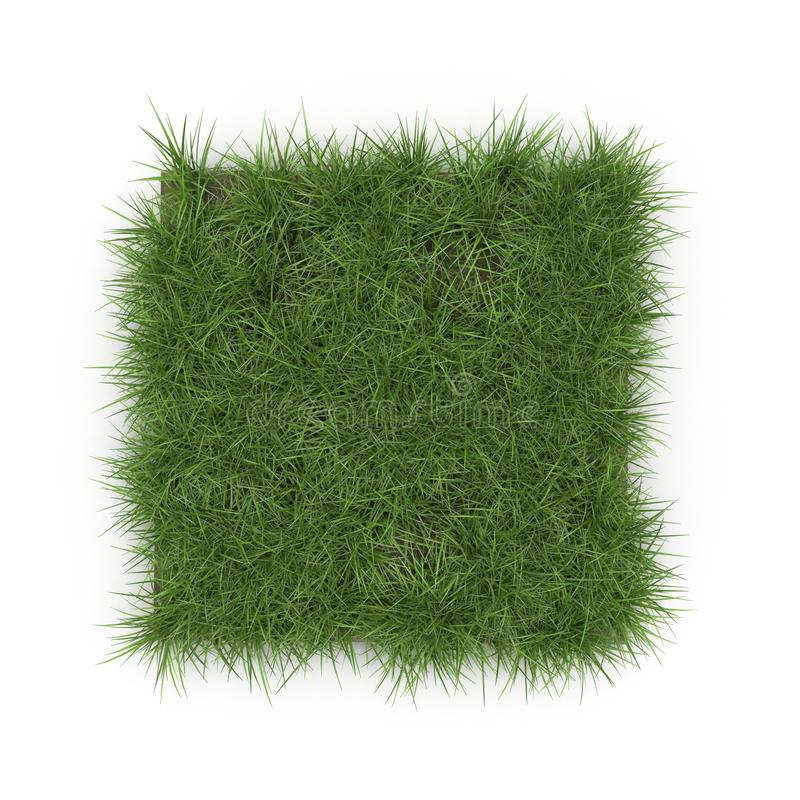 Download Square Of Ryegrass Grass Field Over White Top View 3D Illustration Stock