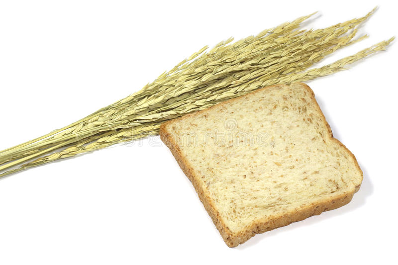 Square slice of fresh whole grain meal bread. Detailed bread texture with ears stock photos