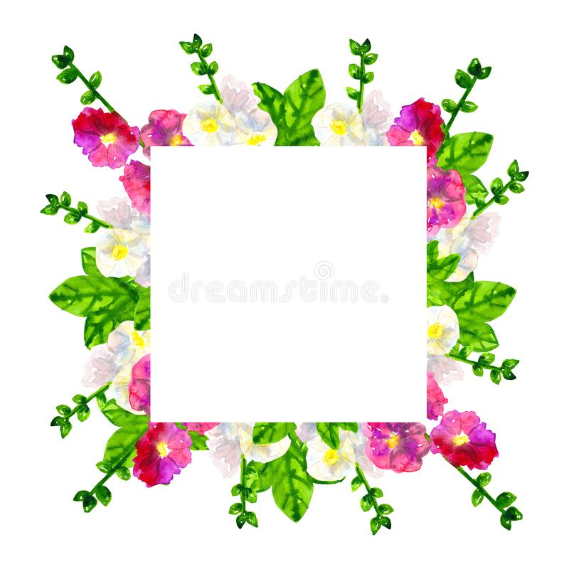 Square template. Pink purple mallow with leaves. White mallow. Hand drawn watercolor illustration. Isolated on white. Square template. Pink purple mallow with royalty free stock photography