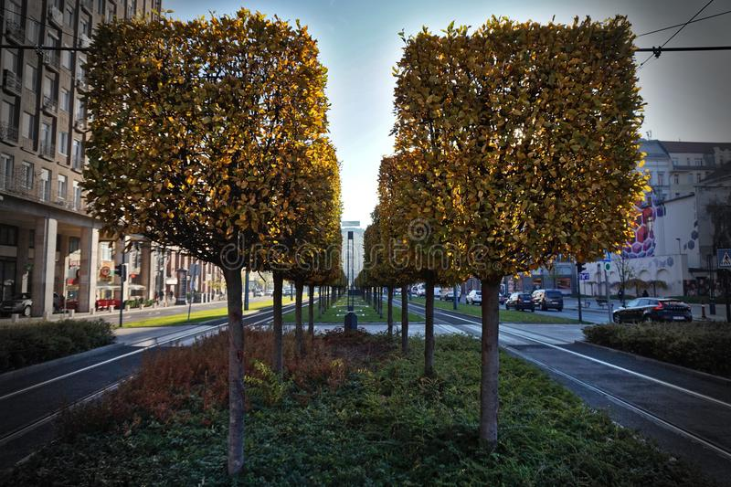 Square trees in the city stock image