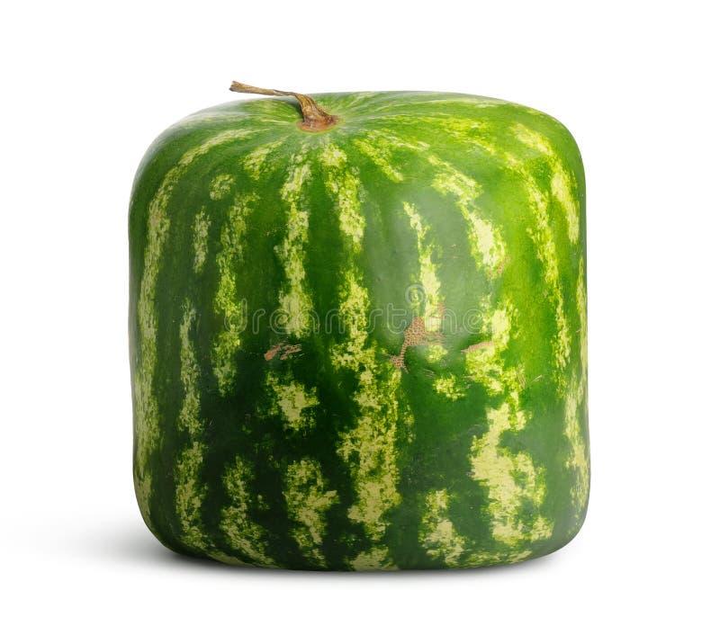 square vattenmelonen royaltyfria bilder