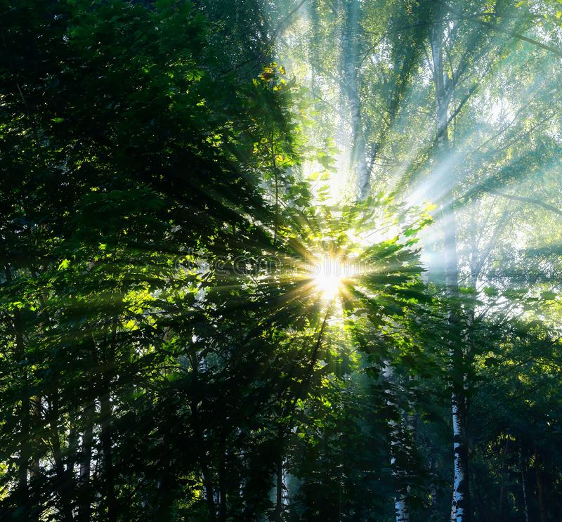 Square vivid sun beams at Russian forest landscape background royalty free stock photo