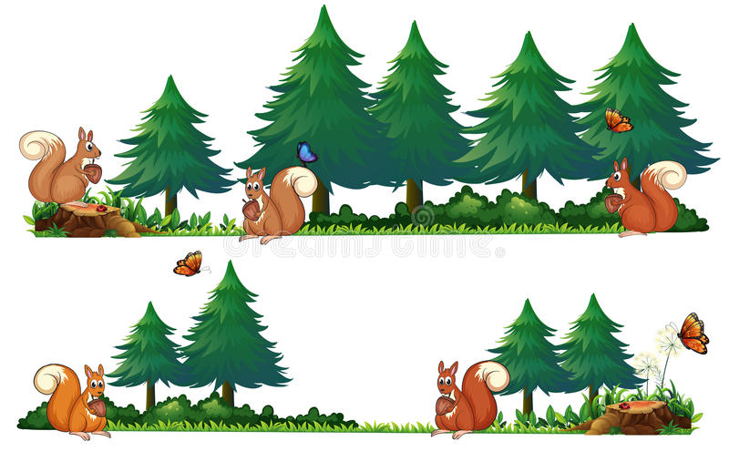 Squarrels en el campo stock de ilustración