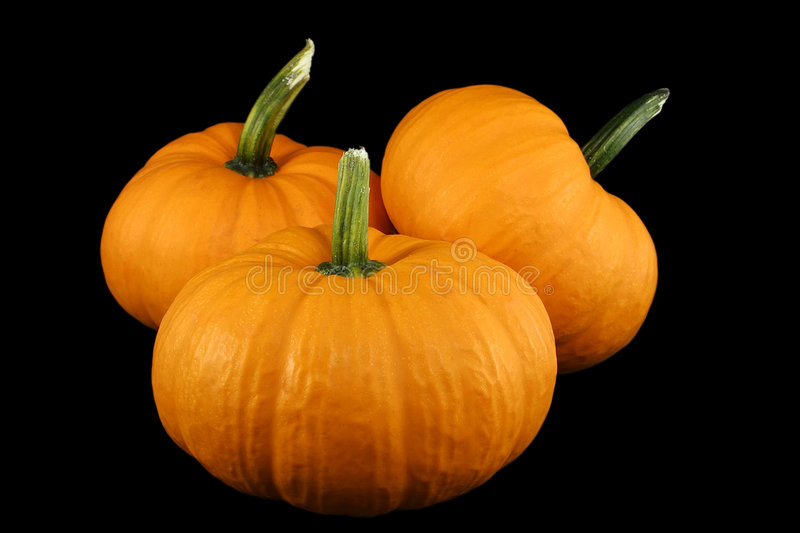Download Squash 2 stock image. Image of isolated, ripe, fall, black - 252079