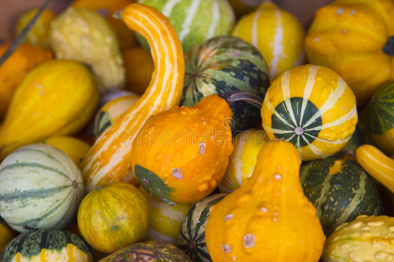 Download Squash in a bucket stock image. Image of group, diet - 27256379