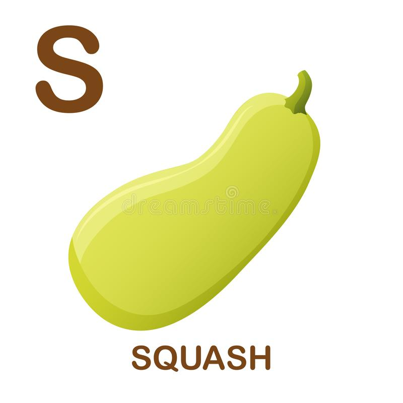 Squash icon with letter S. Cartoon style object. Vector Illustration. Squash vector icon. Illustration for alphabet on white background. Cartoon style, zucchini vector illustration