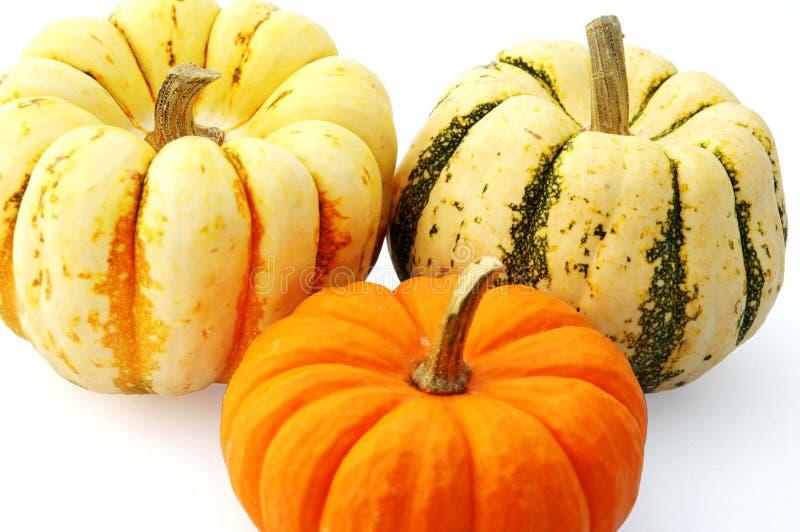 Squash And Pumpkin Royalty Free Stock Image