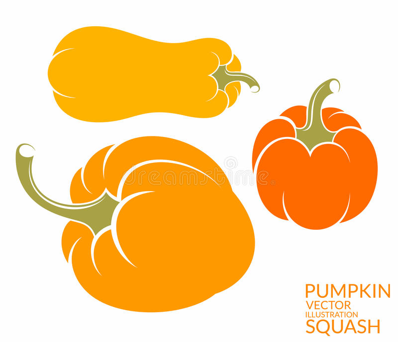 Squash. Pumpkin stock illustration