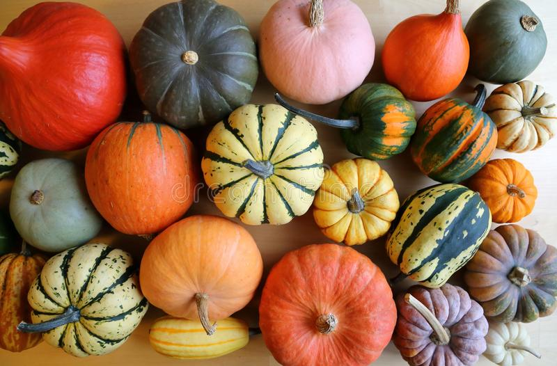 Download Squash and pumpkins. stock photo. Image of food, cucurbita - 83716852