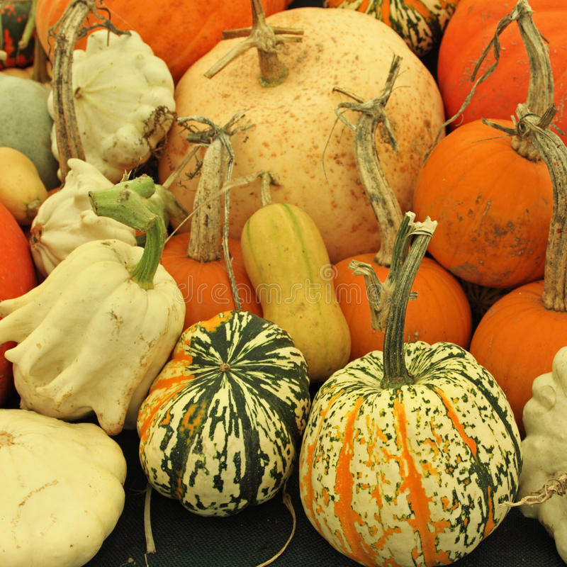 Download Squash Selection stock image. Image of autumn, produce - 35726377