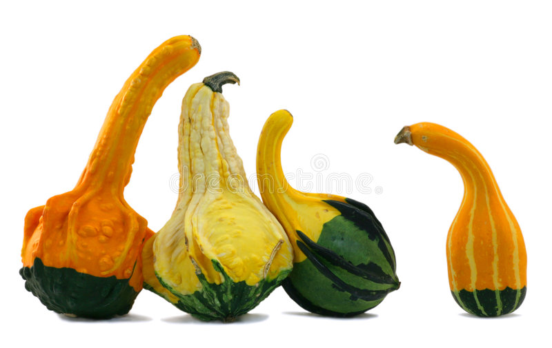 Download Squash Standoff Stock Photography - Image: 3412482