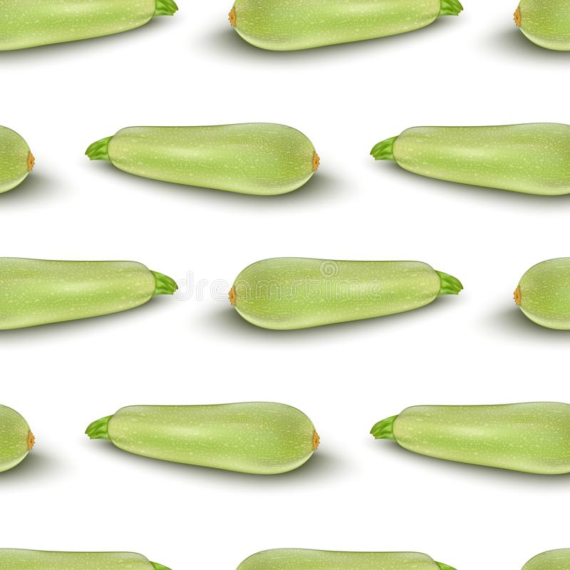 Squash vegetable marrow zucchini isolated on white vector illustration