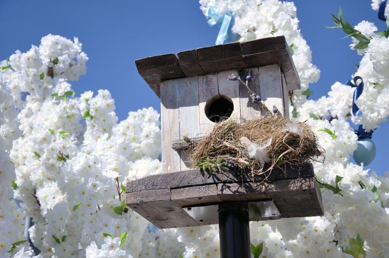 Squashbox Gevend voor dieren en vogels, de problemen van vogeloverleving in de stad stock afbeeldingen