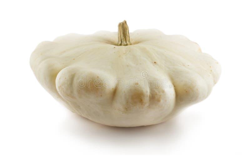 squashwhite royaltyfri bild
