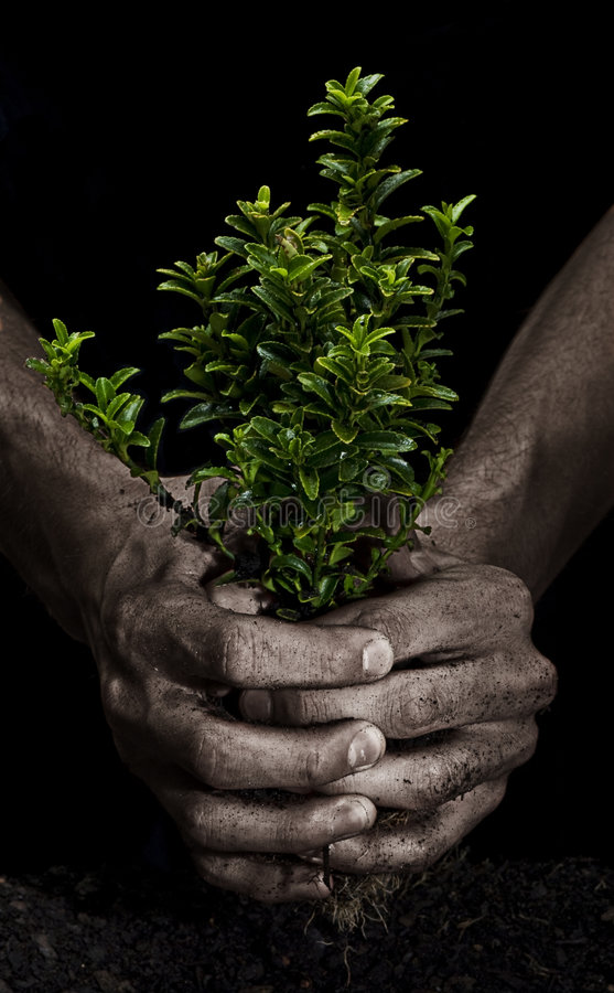 Download Squeezing a Tree stock image. Image of hand, dirt, grow - 8374587