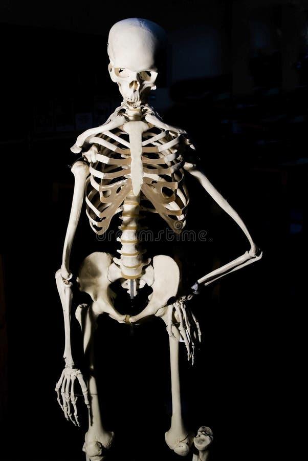 Squelette images libres de droits