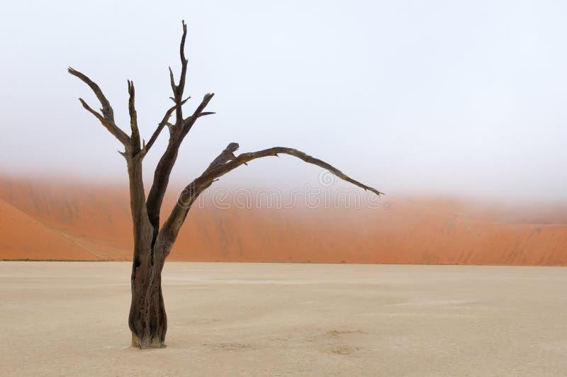 Squelette d'arbre, Deadvlei, Namibie photographie stock libre de droits
