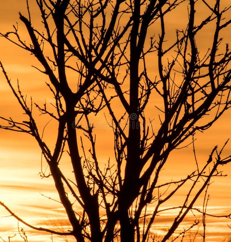 Squelette d'arbre mort silhouetté contre le coucher du soleil photo stock