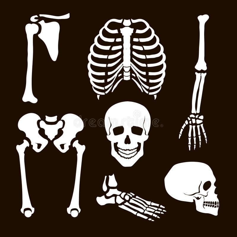 Squelette d'humain de collection illustration de vecteur