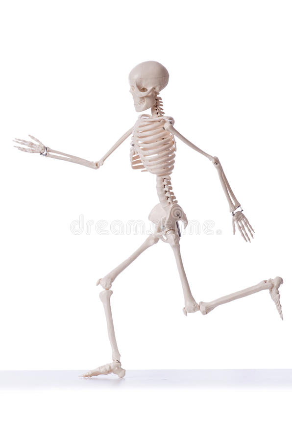 Squelette d'isolement photographie stock