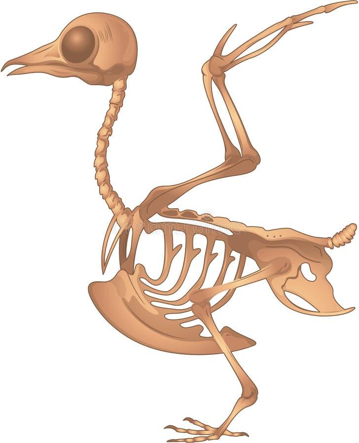 Squelette d'oiseau illustration stock