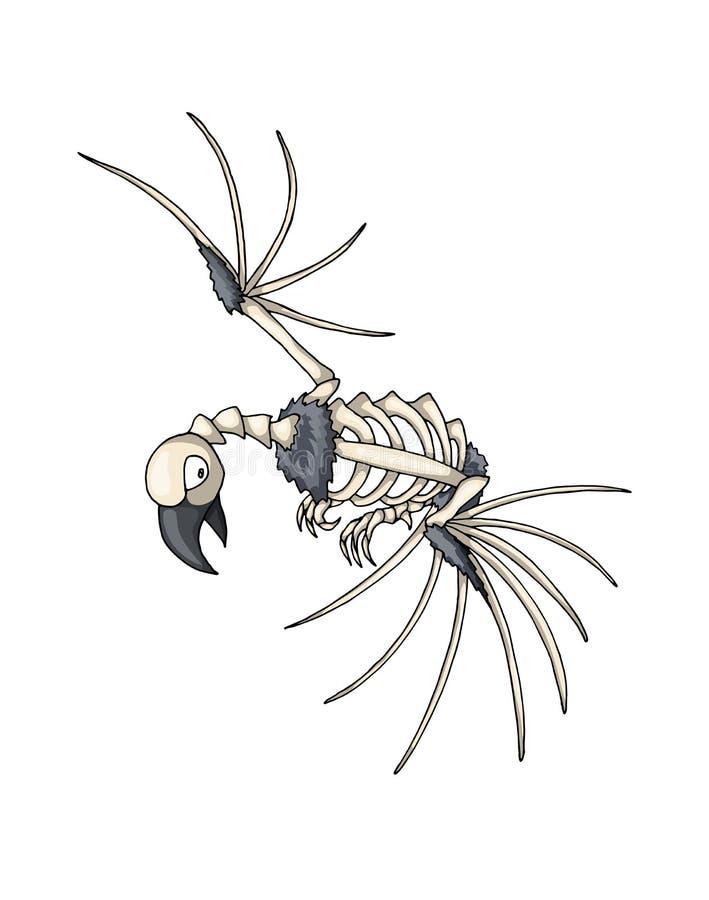 Squelette d'oiseau Objet d'isolement de vecteur sur le fond blanc illustration de vecteur