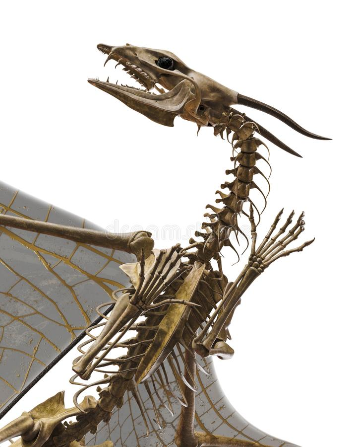 Squelette de dragon à un arrière-plan blanc illustration stock