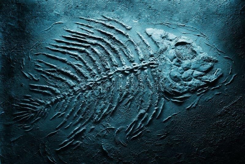 Squelette de piranha sous-marin photographie stock